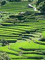 Ōidani rice terraces.jpg