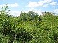 Єврейське кладовище Дрогобич панорама.jpg