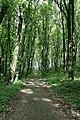 Алея парку-1.jpg