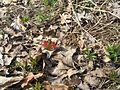 Бабочка (Butterfly) - panoramio.jpg