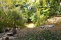 Ботанічний сад під осінніми променями сонця.jpg