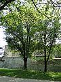Видин, май 2013 - panoramio (154).jpg