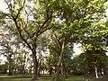 Відтінки весни Міського Саду.jpg