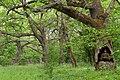 Вікові дуби Самарського лісу.jpg