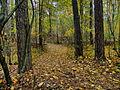В лесу у Веневитиново.jpg