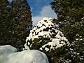 Зимовий дендрпарк.jpg