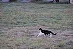 Кошка поймала мышь. Музей гражданской авиации. Ульяновск. Ноябрь 2013 - panoramio.jpg