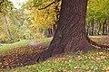 Никитинская усадьба. Парк (2).jpg