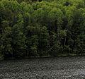 Озеро Глухое (Марий Эл) 02.jpg