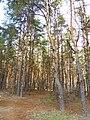 Парк «Северный лес», Воронеж.jpg