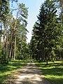 Рубенский парк Rubenes parks (12) - panoramio.jpg