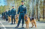 Собаки НГУ 5218 (18732168724).jpg
