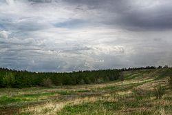 Сосновый лес в тетеревятке.jpg