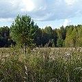 Трасса Пермь-Кудымкар, Р-344 - panoramio (1).jpg