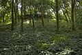 У балці Придніпровська в парку ЗТЗ.jpg