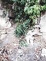 جدار وشجرة.jpg