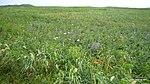 原生花園 - panoramio.jpg