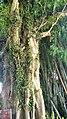 大南山一号营地越野穿越20150822 - panoramio (2).jpg