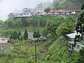 大隘村 Daai Village - panoramio (2).jpg