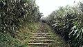 小油坑箭竹林步道.jpg
