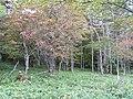 御泉水自然園 - panoramio (6).jpg