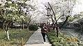 杭州 西湖 曲院风荷(马年樱花) - panoramio.jpg
