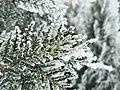 松 · 雪.jpg