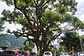 櫻台 Sakura Mound - panoramio.jpg