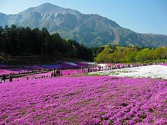 Mount Bukō - Image: 羊山公園の芝桜の丘 (Phlox subulata in Chichibu) 02 May, 2010 panoramio