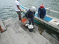 0016Hagonoy Fish Port River Bancas Birds 25.jpg