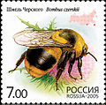 2005. Марка России stamp hi12612325334b2ce19566959.jpg