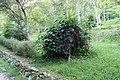 2010 07 17140 5811 Beinan Township, Taiwan, Jhihben National Forest Recreation Area, Walking paths, Plants.JPG