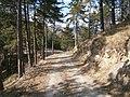 2012-03-24 15h37 piste DFCI au nord de Luceram.jpg