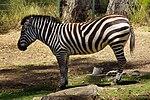 2012-06-09 Oakland Zoo 050 (7439953182).jpg