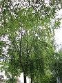 20120828Bismarckstr Saarbruecken2.jpg