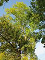 20121021Alte Landstrasse07.jpg
