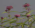 2012 Photo Contest - Plants Category (7943782424).jpg