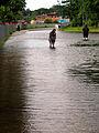 2013-05-31 Biermannstraße Celle, 09b2c02, überflutete Straße mit Katastrophentouristen.JPG