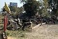 2017-03-05 095830 New Delhi - Jaipur anagoria.JPG