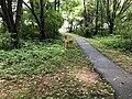 2018-06-02 13 09 52 Deer along a walking path in the Franklin Farm section of Oak Hill, Fairfax County, Virginia.jpg