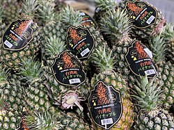 2021 pineapples from Pingtung, Taiwan.jpg