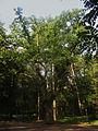 26-256-5001 «Тлумацький парк» м. Тлумач.jpg