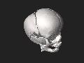 3DPX-003169 Baby cranium NevitDilmen.stl