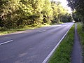 A35 in the New Forest.jpg