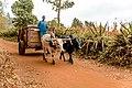AFRICAN Sport utility vehicle.jpg