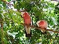A Couple Of Birds (188531893).jpeg