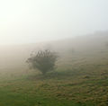 A December view of Woodnook Valley, Little Ponton, Lincolnshire, England 15.JPG