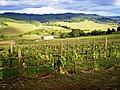 A Lane County, Oregon countryside view at Sweet Cheeks Winery.jpg
