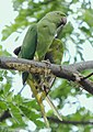 A Parrot on the tree Branch !.jpg