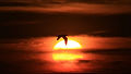 A bird touching the sun with his wing.jpg